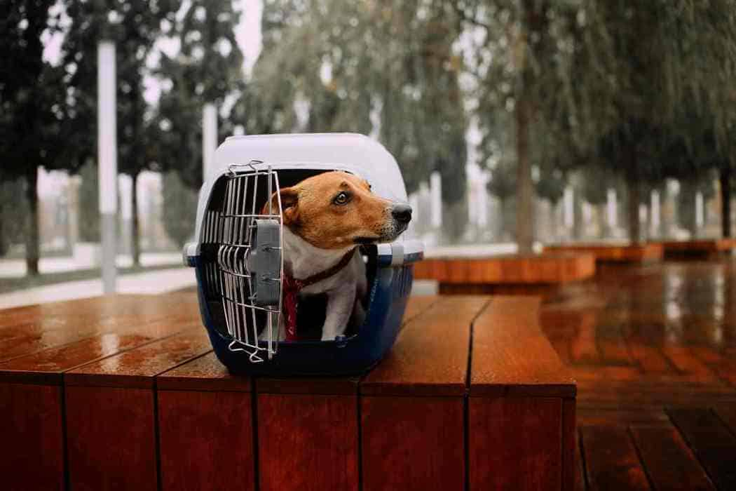 CAN A JACK RUSSELL BE LEFT ALONE? #dogs #pets #puppies