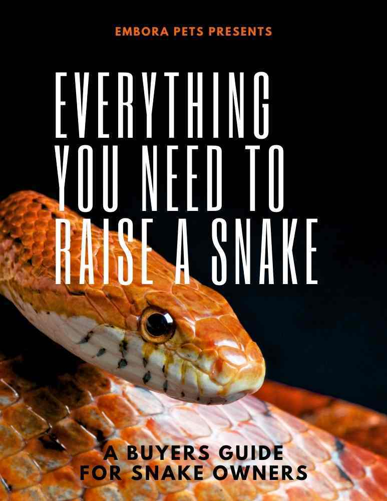 Snake Buyer Guide - everything you need to buy to raise a pet snake