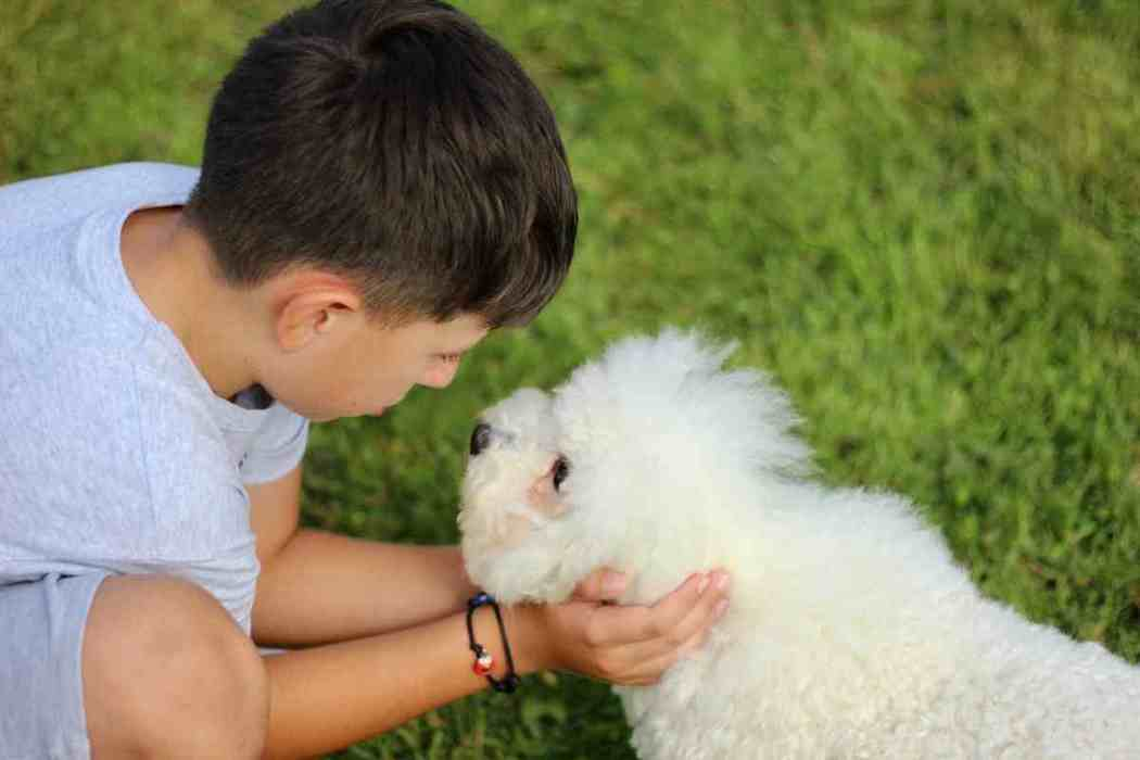 Why Do Bichons Whine So Much?