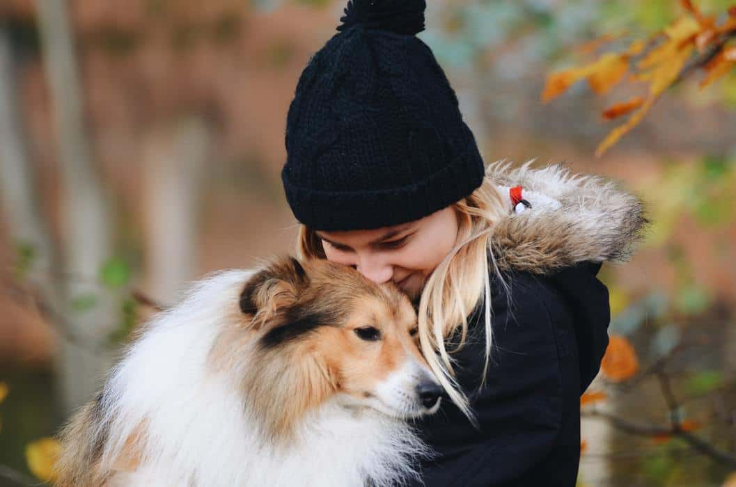 Are Shelties Picky Eaters? (And What to Do About It) A young girl hugging a sheltie shetland sheepdog dog in autumn fall season