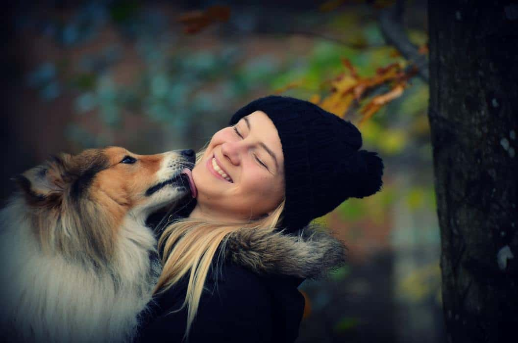 Portrait of a young woman being kissed by her Sheltie Shetland Sheepdog dog in autumn