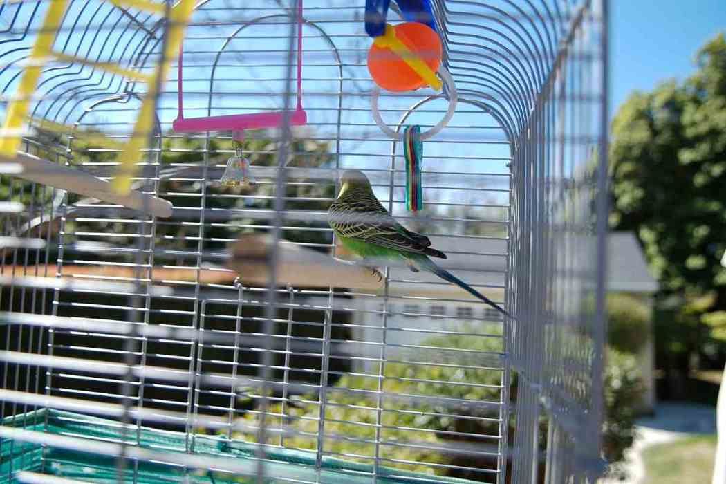 What Kind of Toys Do Parakeets Like to Play With?