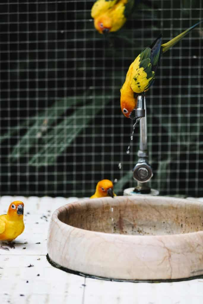 Birds drinking water from a fountain