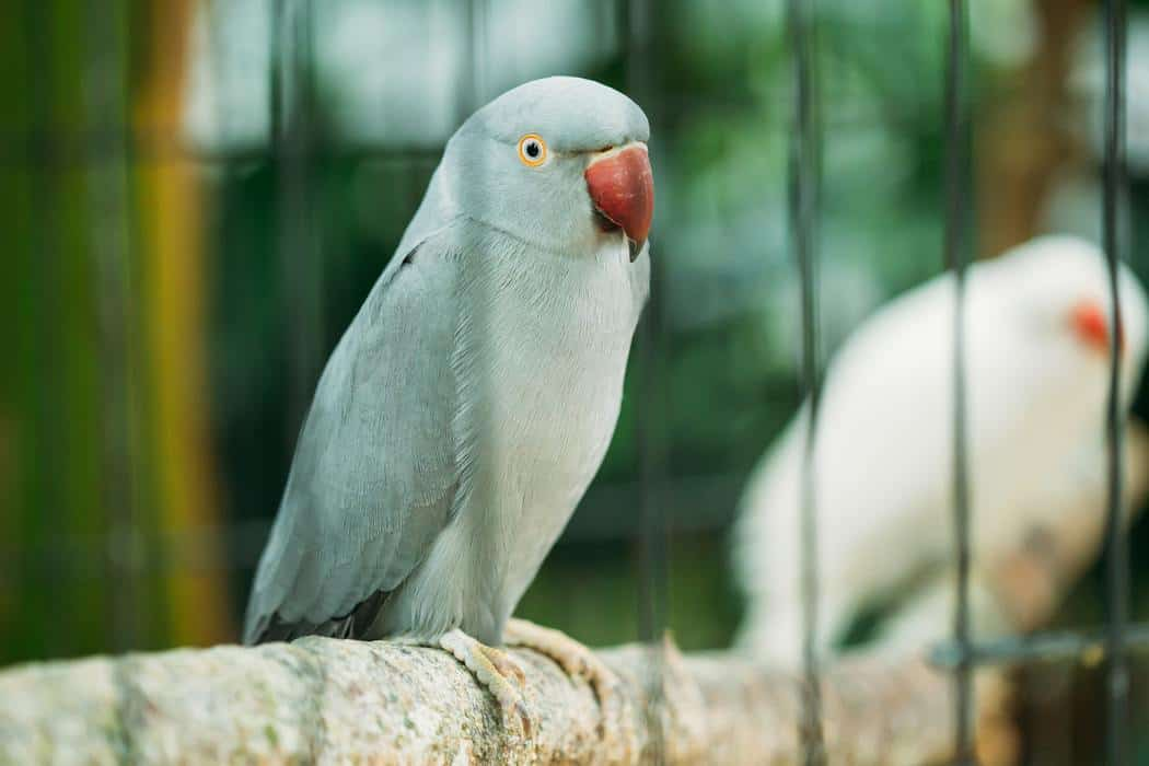 Do Parakeets Need A Nest In Their Cage