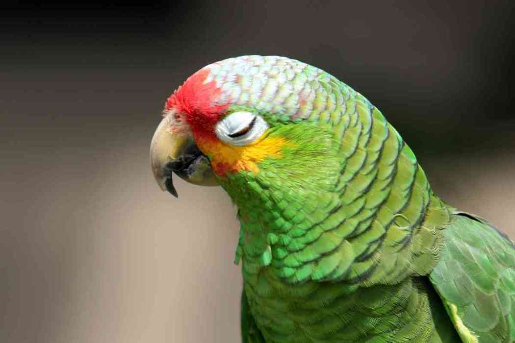 Why Is My Parakeet Closing Its Eyes?