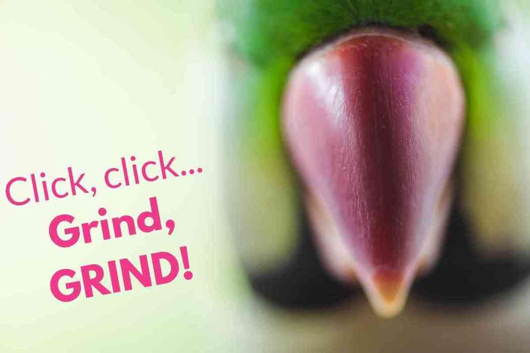 Why is My Parakeet Grinding His Beak?
