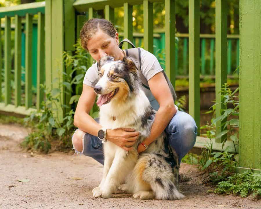 How Big Do Australian Shepherds Get