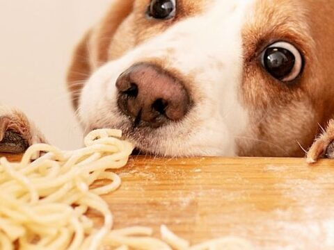 Are Beagles Picky Eaters?