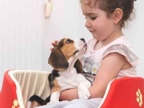 Do Beagles Like To Cuddle?