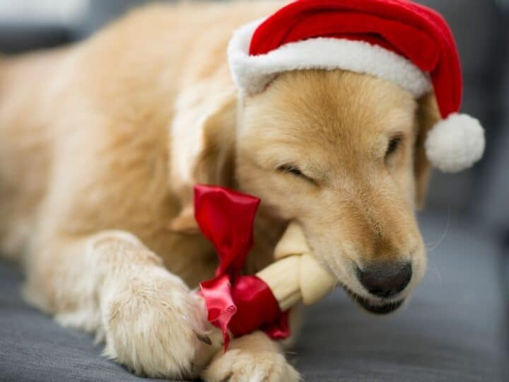 Gifts For Mini Goldendoodle Owners